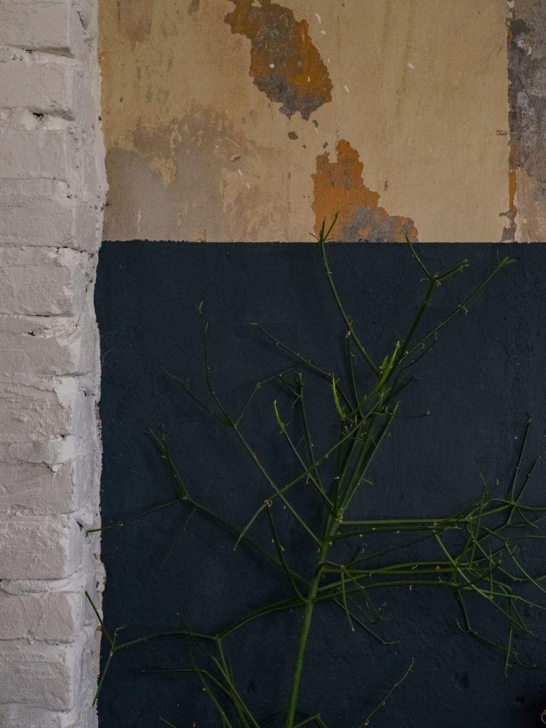 Wand, Pflanze, Interior_1