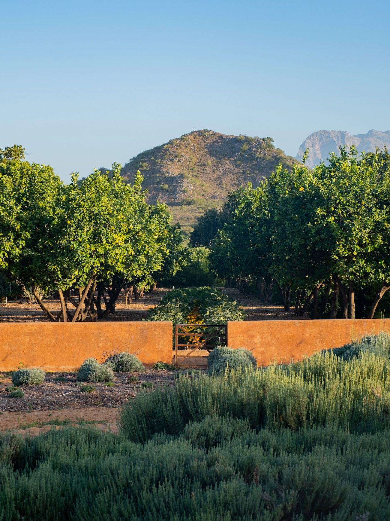 Weinguide Stellenbosch, Babylonstoren, Garten, Bäume, Rosmarin