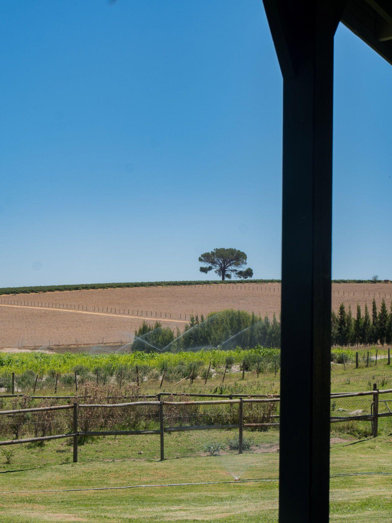 Weinguide Stellenbosch, Middelvlei, Ausblick, Baum
